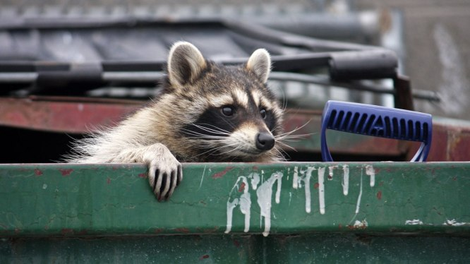Chunky in a dumpster