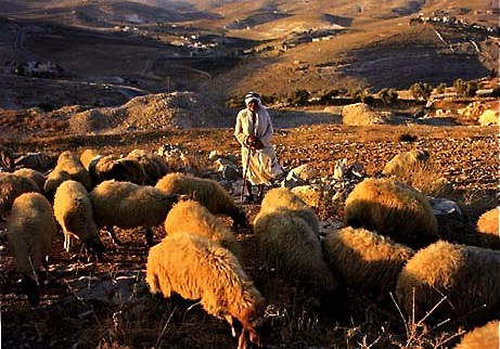 shepherds-field